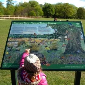 Richmond Park - zapraszam na wycieczke   :)      czesc 1