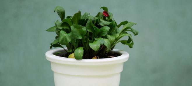 Muszki w kwiatach domowych, jak się ich pozbyć?