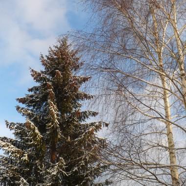 ..............i drzewa..............