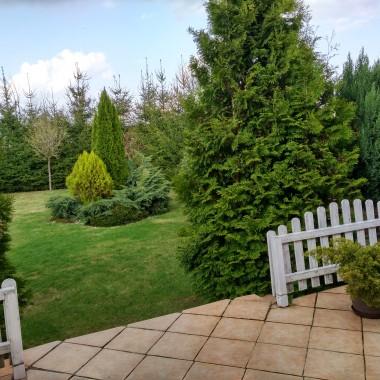 Kolejna wiosna w naszym ogrodzie, wszystko tak rośnie szybko .... zieleni się każde drzewko i krzewy ... już planuję co nowego będziemy sadzić . Pozdrawiam i dziękuję za odwiedziny w moich galeriach.