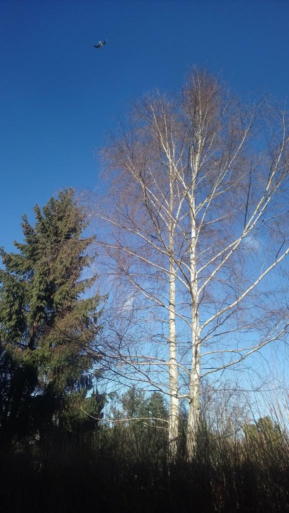 Dekoratorzy, Czekając na wiosnę .................. - ..................i brzoza..............