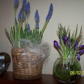 trochę wiosny