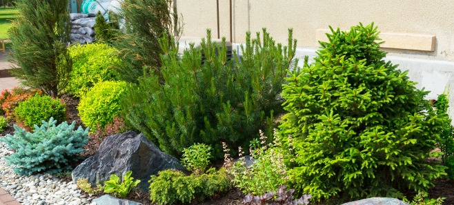 Poradnik ogrodnika: Rośliny szybko rosnące