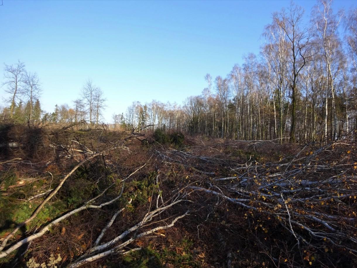 Leśne klimaty, Był las...