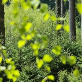 Shinrin-yoku. Japońska sztuka czerpania mocy z przyrody - Rośliny we wnętrzu