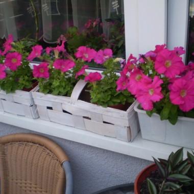 początki balkonowe,moja mała oaza