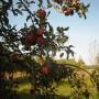 Rośliny, Esencja lata.................. - Lato trwa....................gorące ...............prawie tropikalne...............ale widać już pierwsze oznaki jesieni....................Dolina Mimozy znów rozkwitła .................w dzisiejszej galerii ................kwiaty lata ............i ulubione datury..................w końcu zakwitły ...............oraz letnie haftowanki .........zapraszam :)