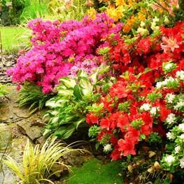 Piękno i różnorodność ogrodów jest niezliczona. Wiosna zawitała u nas na dobre, więc i  ogrody zaczynają żyć nowym życiem.
