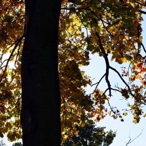 jesienne słońce w koronach drzew