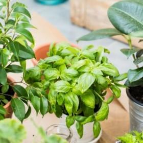 Triki, dzięki którym twoje rośliny doniczkowe będą uprawiać się same