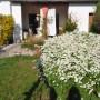 Ogród, Wiosna i koty