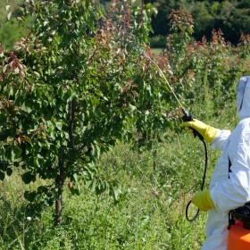 Choroby drzew owocowych