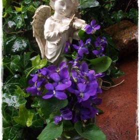 W anielskim ogrodzie i wiosennych zbliżeniach &#x3B;