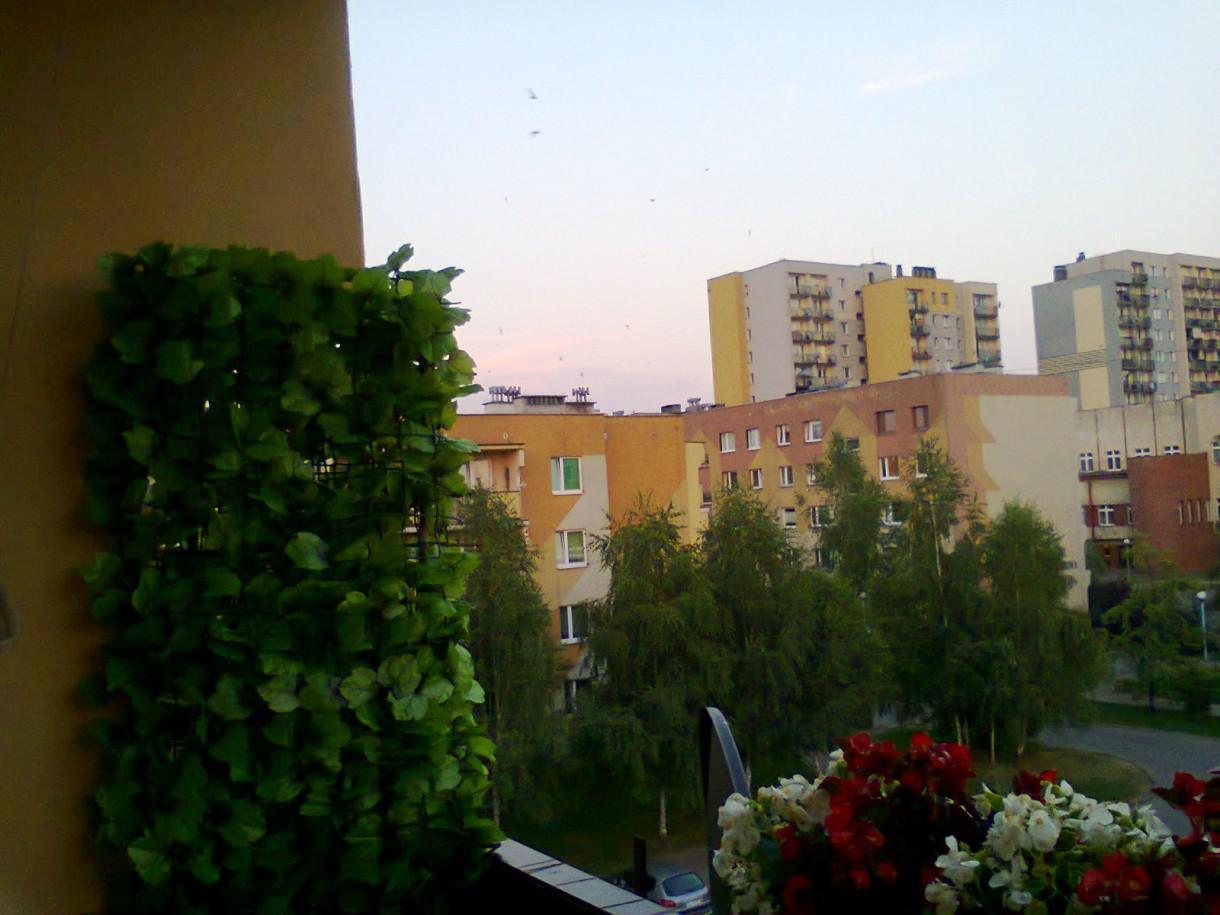 """Pozostałe, balkon - Zamiast """"żywych"""" roślin do kratki przymocowałam sztuczny bluszcz. Wreszcie nie ma problemu z mszycami i innymi zarazami i nie śmieci, a efekt zasłonięcia jest od razu - nie muszę czekac aż urośnie i nie muszę podlewac."""