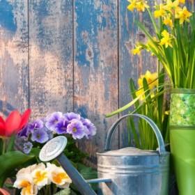 Ogród z ekspertem: Pielęgnacja ogrodu po zimie