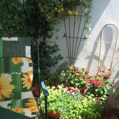 Nie mam ogrodu , ale mam balkon.Moje małe królestwo.