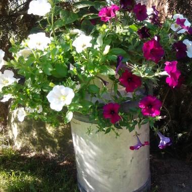 U mojej mamy w ogródku...