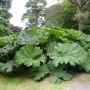 Rośliny, weekend w irlandii :)