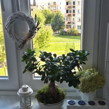 już tęsknię za zielenią za oknem...