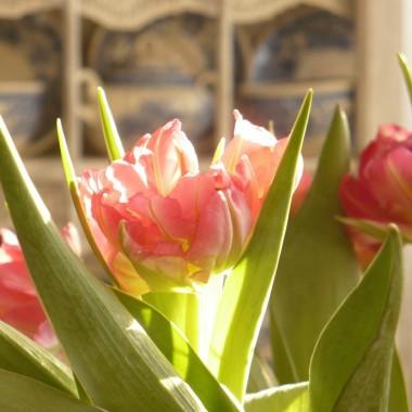 ...........i tulipany..........