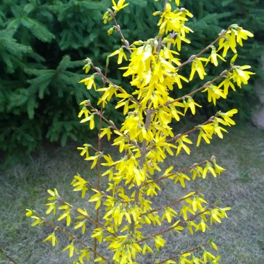 Wiosna w moim ogrodzie ...