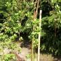 Ogród, Ogród wiosną... - Nowe drzewka w ogrodzie już rosna ....