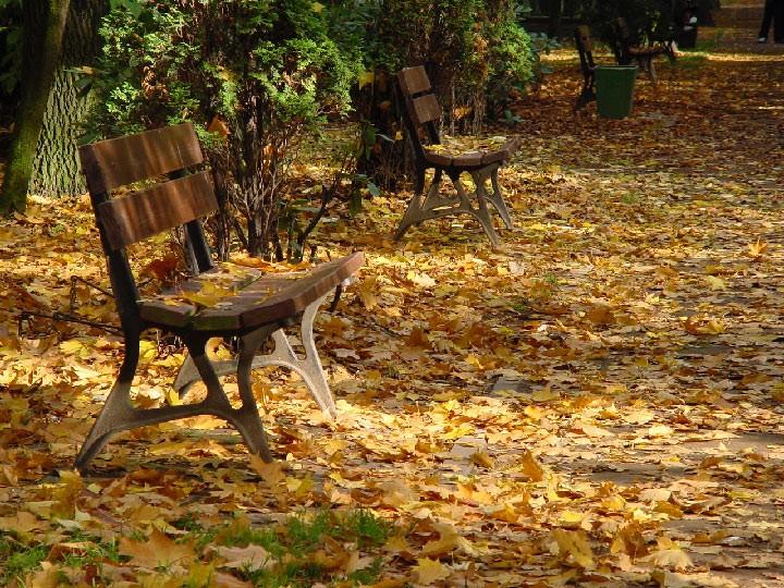 Rośliny, Jesienne klimaty