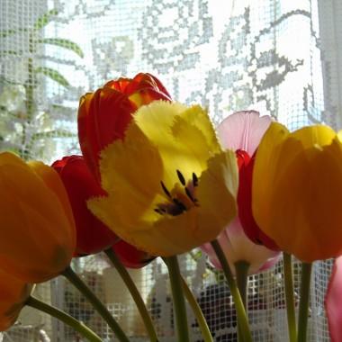 ..............i tulipany .................