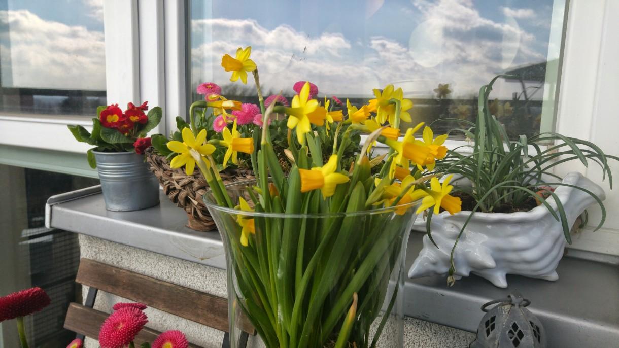 Balkon, wiosna zawitala na moim balkonie
