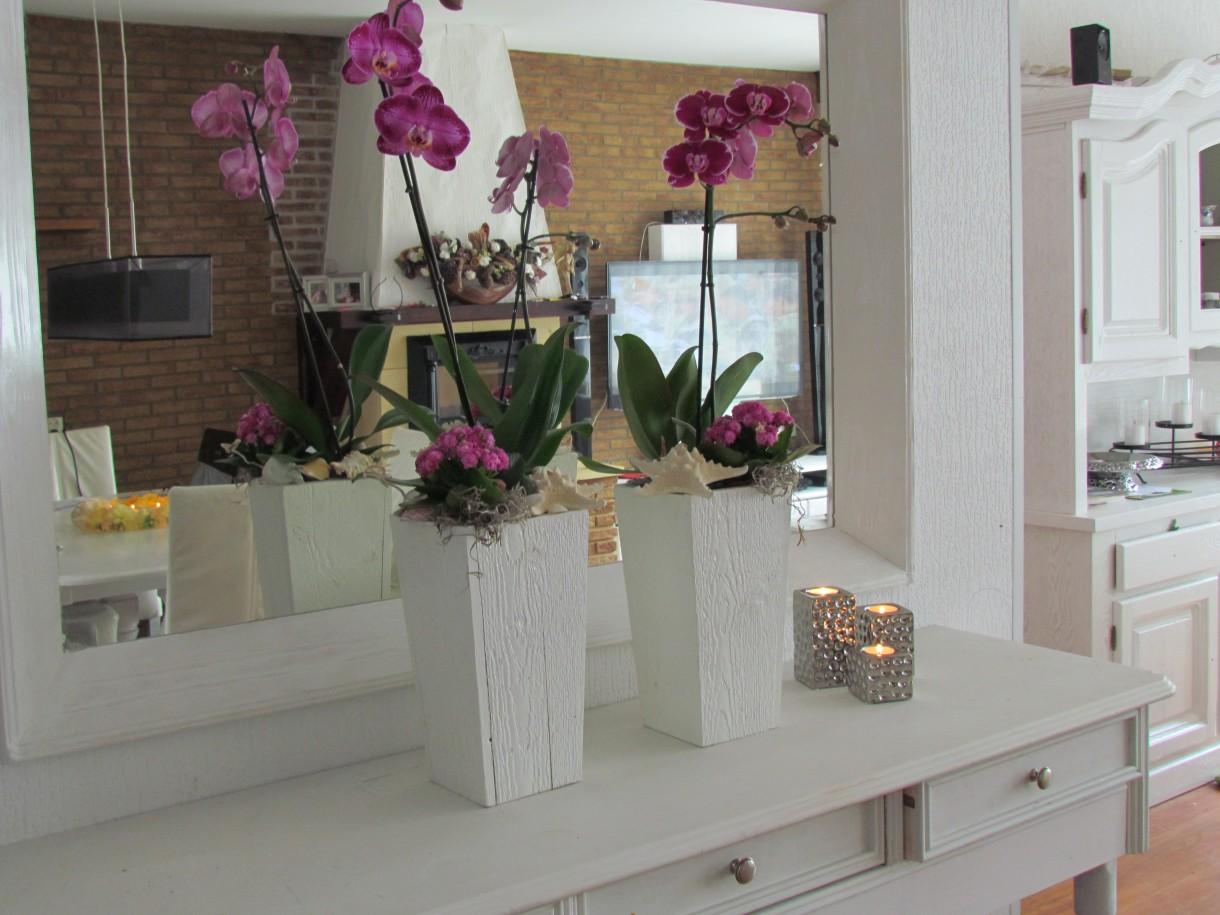 Pozostałe, orchidea