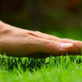 Ogród z ekspertem: Wiosenna pielęgnacja trawnika