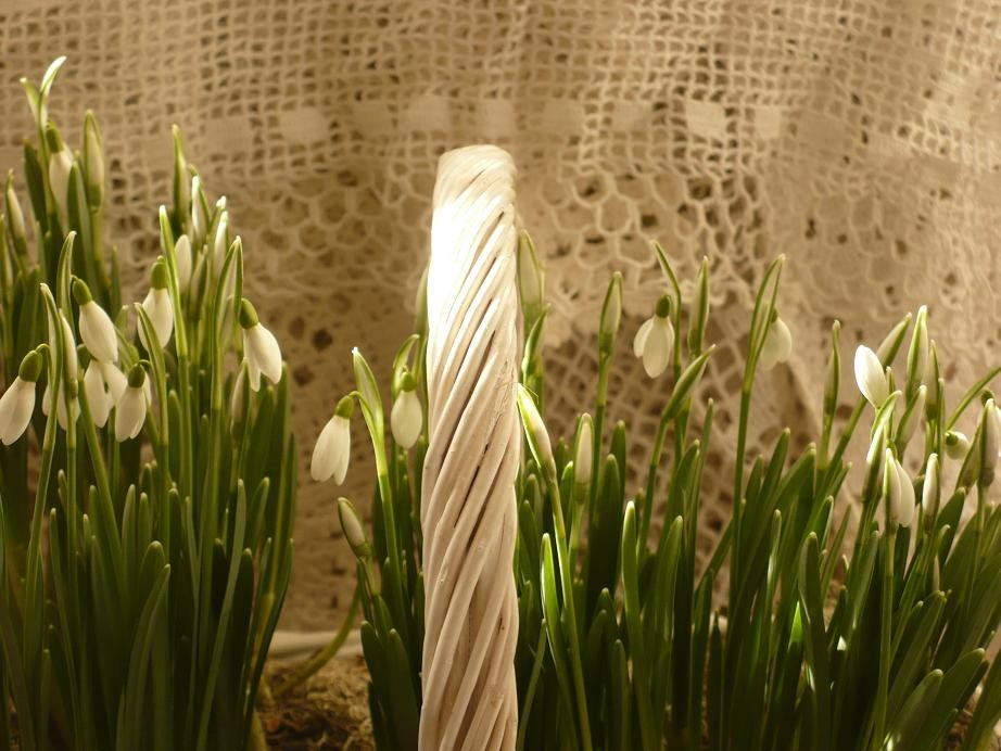 Dekoratorzy, Czekając na wiosnę .................. - ..................i przebiśniegi w domu................