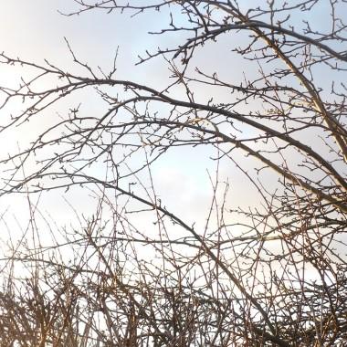 ...........i  drzewa i krzewy bez liści ..................