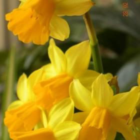 Powiew wiosny :)