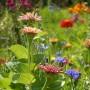 Rośliny, W MOIM OGRÓDKU...