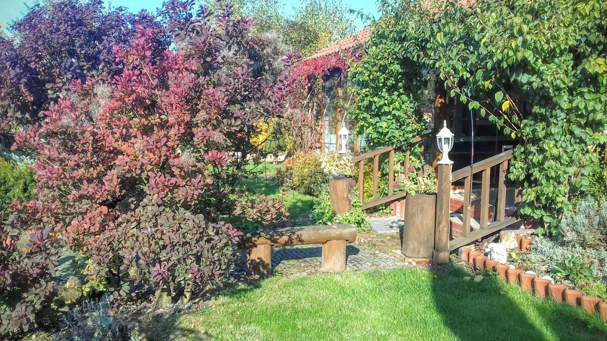 """Pozostałe, Jesień w ogrodzie """"Wyjątkowego domu"""""""