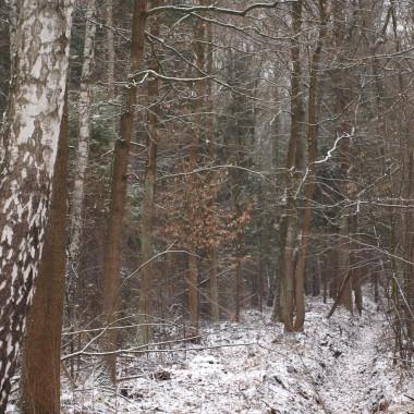 Zapraszam na przedświąteczny spacer po lesie lekko  posypanym śniegiem ...