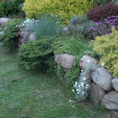 rośliny skalne
