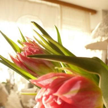............i tulipany..........