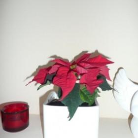 dekoracje z małego m i troszke kochanych kwiatków &#x3B;-)