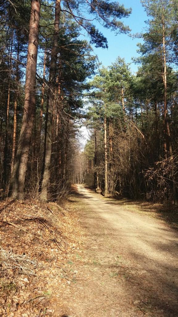 Spacer po lesie w pełnym słońcu