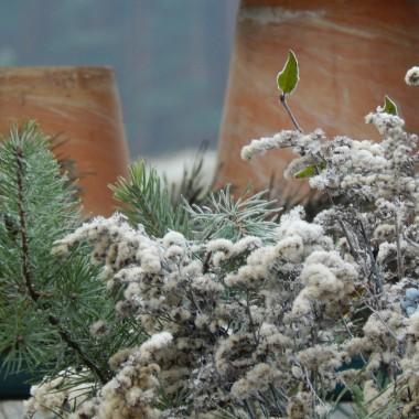 :)Przyznaję,że ulegam zauroczeniom:)Zima mnie oczarowała...Z nieba spadają delikatne płatki śnieguMróz tworzy maleńkie kryształki.Przed domem zrobiłam kilka kompozycji z naturalnych gałązekKryształki lodu otulają gałązki suchej nawłoci,czerwone owoce dzikiej róży...jemiołę,czarne owoce ligustru i pędy dzikiego powojnika.