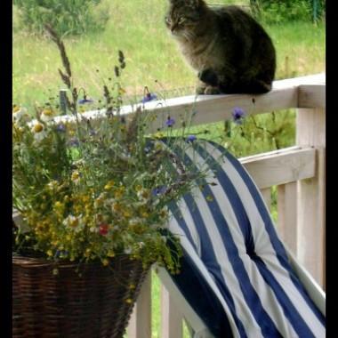 Kot, przybłęda czeka na kolację.