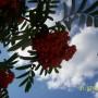Rośliny, wspomnienie o lecie