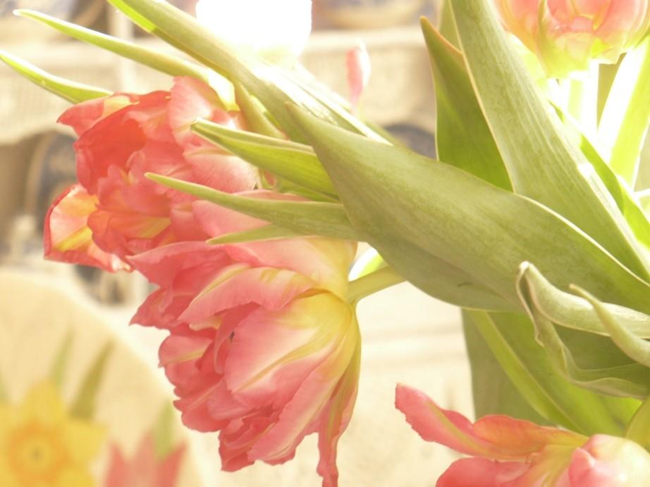 Pozostałe, Lutowa...............zimowa..............z damami.....i panami.. - ...............i tulipany.............