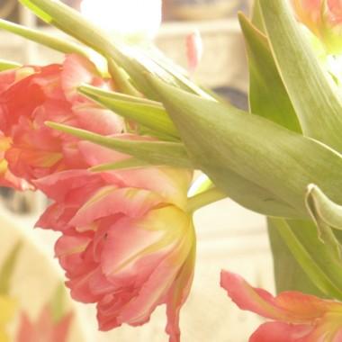 ...............i tulipany.............