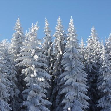 Zimową porą:)