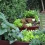 Ogród, Ogrod - Musze przyznac ze dawaly duze plony:)