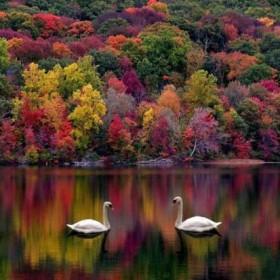 Jesienne ogrody. jesienne krajobrazy.........jesień.......