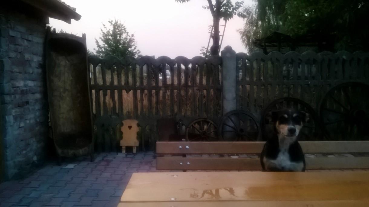 Realizacje, altanka z grillem i wędzarnią - kiedy podają do stołu?